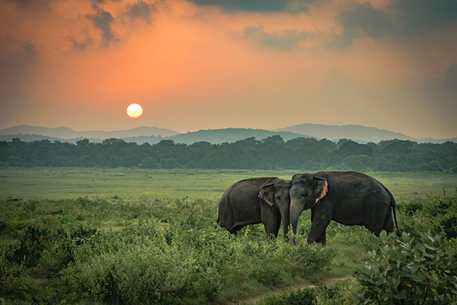 bm8t1i1og2585k5i - Sri Lanka Balayı