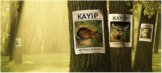 dogal_hayati_korumaya_katki_koyun