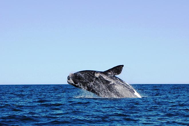 ntakljjxuhuf4az2 - balina göçü
