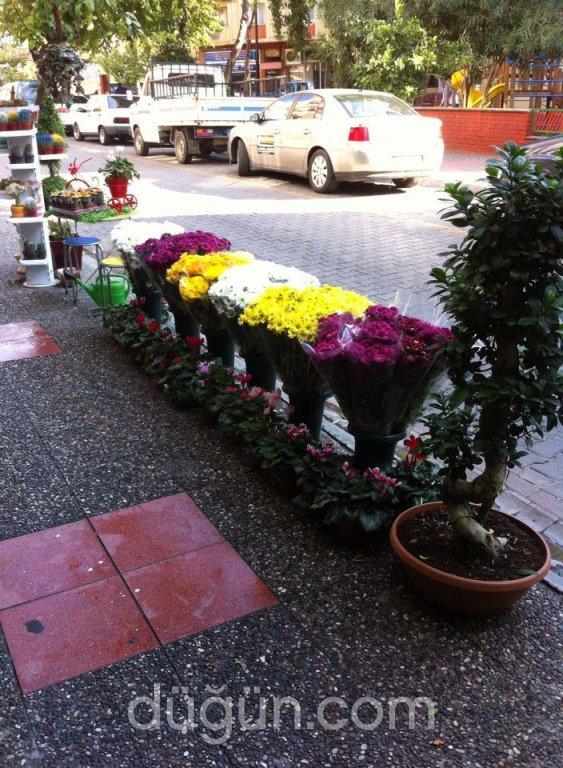 Asil Çiçekçilik