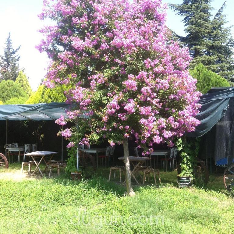 Grand Ömür Camping