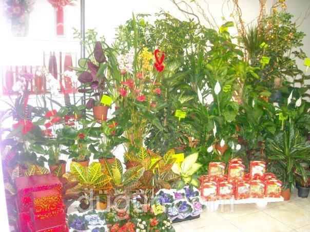 İris Çiçekçilik