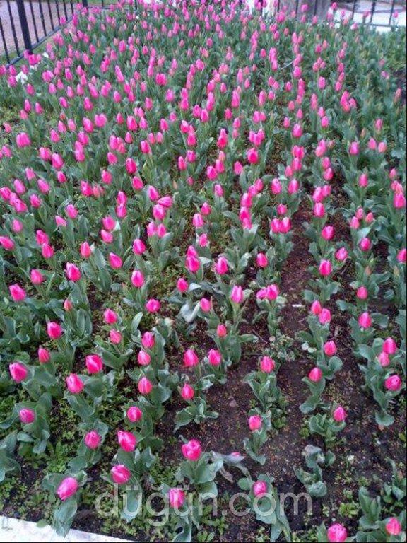 Garden Çiçekçilik