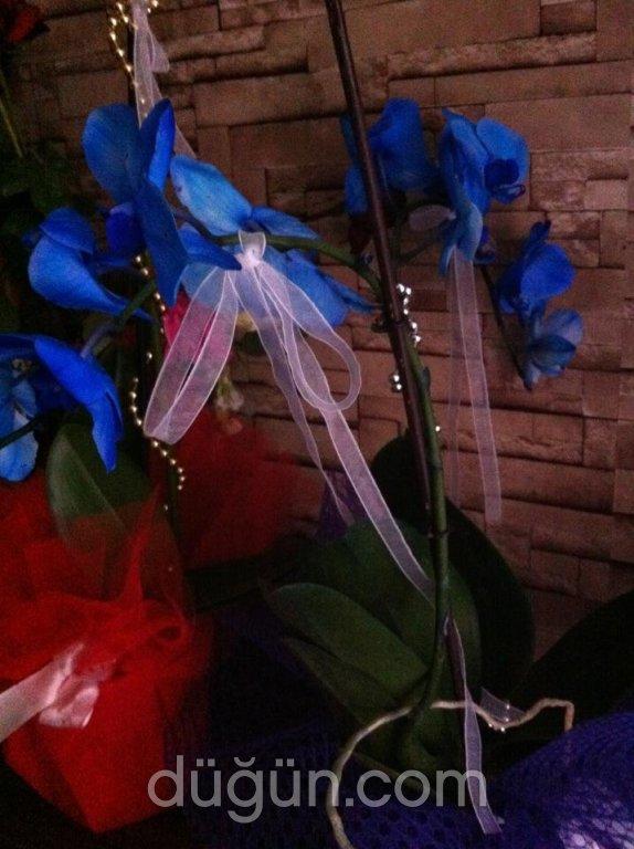 Mimoza Çiçekçilik