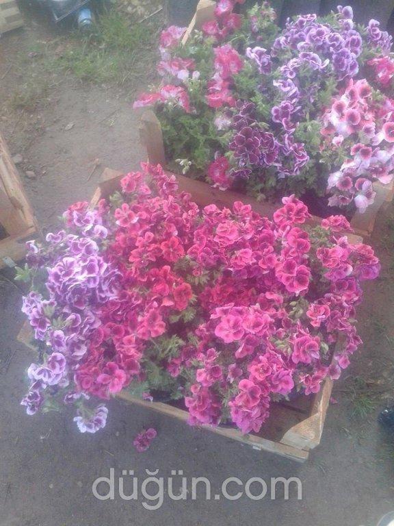 Aker Çiçekçilik