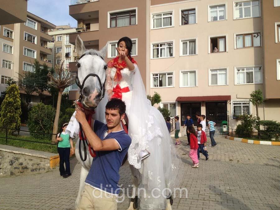 Atevi Gelin Atı