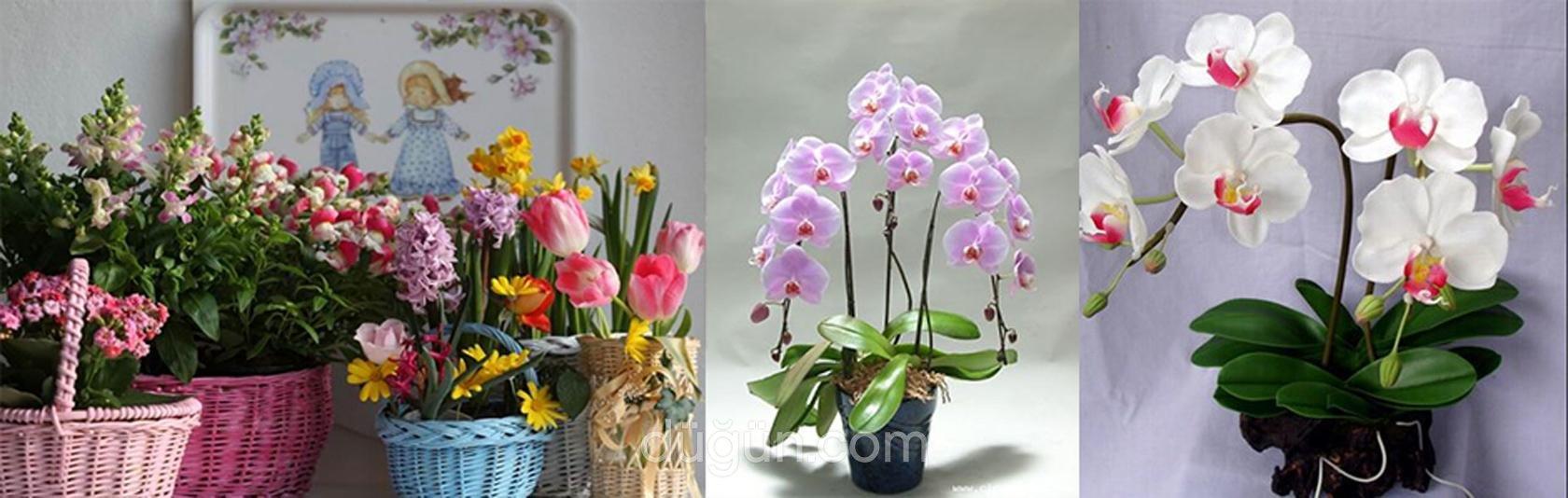Sarmaşık Çiçekçilik
