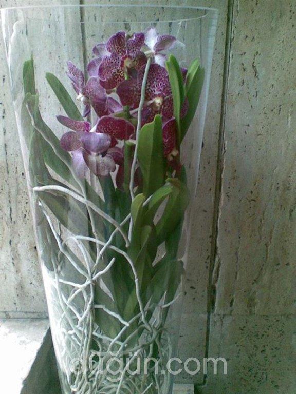 Tropikal Çiçekçilik