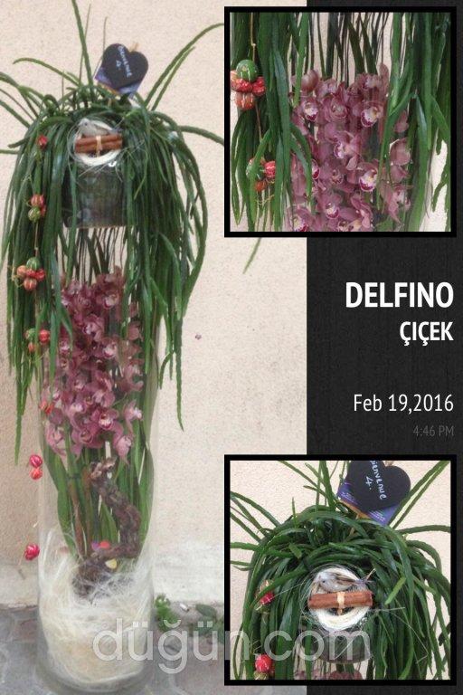 Delfino Çiçek