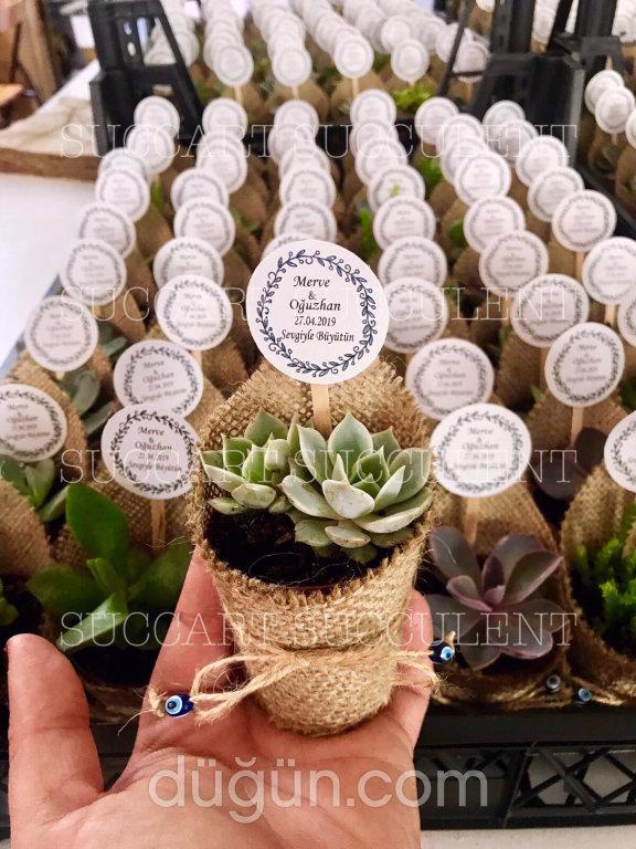 Succart Succulent