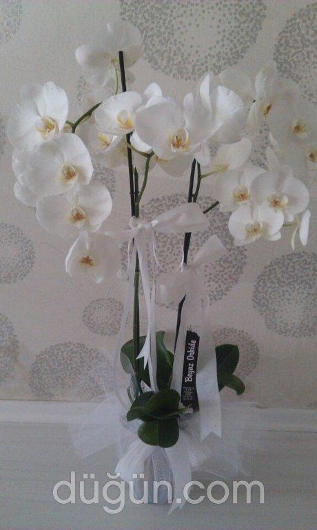 Beyaz Orkide Çiçekcilik