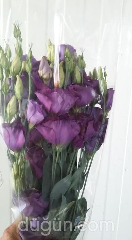 Salman Çiçekçilik
