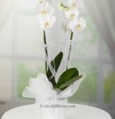 Çiçekçi Naki