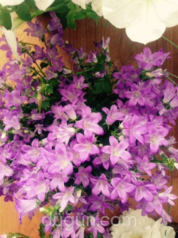 Mevsim Çiçekçilik