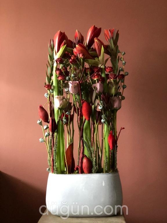 Pyha La Graine Flowers
